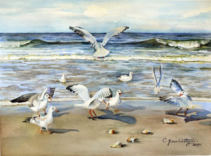 Gulls in Laguna Beach